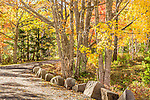 Fall foliage on a carriage road in Acadia National Park, Maine, USA