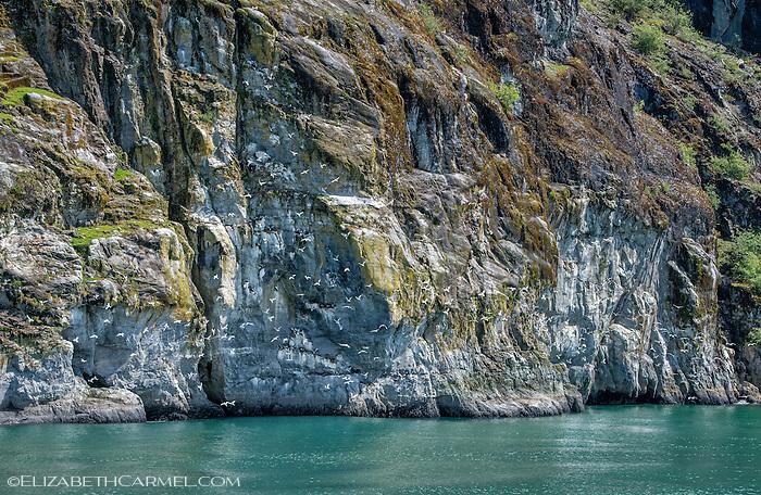 Glacier Bay Cliffs