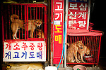 "Dogs wait to be butchered for their meat in Busan, South Korea. August 13 is one of three ""boknal"", considered the hottest days of the year, a day when eating dog meat is considered by some to have a cooling effect on the body. Though the practice continues, many South Koreans are opposed to eating dog."