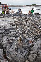 Tourists photograph the Marine Iguana, Punto Espanosa, Fernandina Island, Galapagos Islands, Ecuador