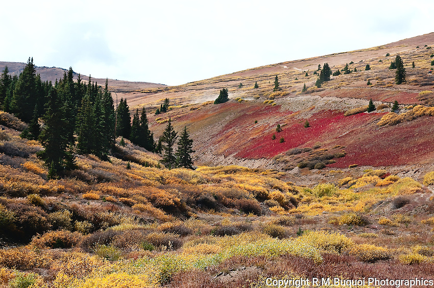 High Country Color