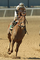 HOT SPRINGS, AR - APRIL 15: Conquest Bigluck E #5, with jockey Luis Contreras aboard after the 5th race at Oaklawn Park on April 15, 2017 in Hot Springs, Arkansas. (Photo by Justin Manning/Eclipse Sportswire/Getty Images)