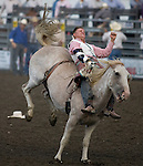 Royce Ford, from Briggsdale, CO., hangs onto Lurking News during the Bareback Riding Competition at the Kitsap County Fair and Stampede  held Aug. 26 to Aug. 30, 2009 in Silverdale, WA.  Jim Bryant Photo. All Right Reserved. © 2009