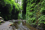 Its vertical walls lined with ferns, Fern Canyon winds its way through Prairie Creek Redwood State Park. Prairie Creek Redwood State Park was created in 1920 as a sanctuary for old growth coast redwoods. Photographed 07/08