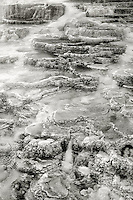 798900092bw the limestone detail of minerva springs in yellowstone national park wyoming becomes abstract lines and forms when rendered in black and white