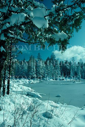 Cedar swamp in Michigan's Upper Peninsula in winter.