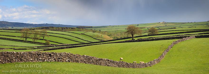 Drystone walls near Litton, Peak District National Park, Derbyshire, UK. May. Digitally stitched panorama.