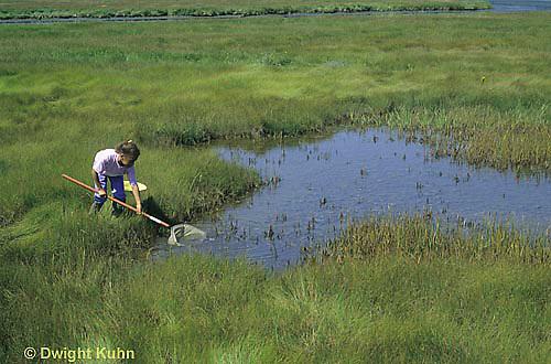 AC35-002z  Girl collecting specimens at salt marsh