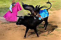 An Andean condor fights against a wild bull during the Yawar Fiesta held in the mountains of Apurímac, Cotabambas, Peru, 30 July 2012. The Yawar Fiesta (Feast of Blood), an indigenous tradition which dates back to the time of the conquest, consists basically of an extraordinary bullfight in which three protagonists take part - a wild condor, a wild bull and brave young men of the neighboring communities. The captured condor, a sacred bird venerated by the Indians, is tied in the back of the bull which is carefully selected for its strength and pugnacity. A condor symbolizes the native inhabitants of the Andes, while a bull symbolically represents the Spanish invaders. Young boys, chasing the fighting animals, wish to show their courage in front of the community. However, the Indians usually do not allow the animals to fight for a long time because death or harm of the condor is interpreted as a sign of misfortune to the community.
