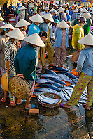 Inspecting fish at Hoi An's early morning fish market.