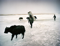Walking on the icy spring of a claimed Source of the Oxus, the Chelab river. Chelab camp. Every evening, Kyrgyz gather their yak herds back to their camp..Winter expedition through the Wakhan Corridor and into the Afghan Pamir mountains, to document the life of the Afghan Kyrgyz tribe. January/February 2008. Afghanistan