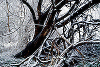 FROST COVERED FOREST &amp; FOG<br /> Winter landscape