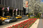 New York City, New York: Tulips on Park Avenue  .Photo #: 275-14750  .Photo copyright Lee Foster, www.fostertravel.com, lee@fostertravel.com, 510-549-2202.