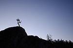 Silhouette of a tree at dawn, Sierra Nevada, Eldorado National Forest, California