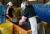"""Staff weighing down a mixture of yaezakura cherry blossom, salt, and """"ume"""" plum juice at a processing facility. Matsukawa-city, Nagano Prefecture, Japan, April 26, 2013. Farmers in the Matsukawa area of Nagano prefecture grow yaezakura cherry blossom to be used as an ingredient in Japanese cakes, sweets and other foods."""