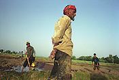 Working the land near Hissar, Tajikistan