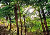 Farino, parc des grandes fougères