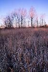 Winter field and trees at sunrise, North Carolina