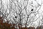 Bird in Bush 3, Crystal cove, CA.