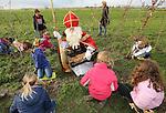Foto: VidiPhoto<br /> <br /> HAARZUILENS - Kinderen van groep 5 en 6 van de Sint Bonifatiusschool uit Haarzuilens planten woensdag de eerste 3.000 van in totaal 180.000 bloembollen die in het nieuwe Parkbos de Haar door Sinterklaas zijn uitgestrooid. Daarbij krijgen ze praktische aanwijzingen en hulp van de goedheiligman die sinds afgelopen weekend weer in het land is. Eerder op de ochtend hadden de kinderen ook een bloembollenles gehad op school. De bloembollen zijn door de Koninklijke Algemeene Vereeniging voor Bloembollencultuur (KAVB) aangeboden aan Natuurmonumenten die het parkbos ontwikkelt. In overleg met Natuurmonumenten is gekozen voor een mengsel van 15 zogenoemde heembollen, waaronder boshyacinten, sneeuwklokjes, boerenkrokussen, dichtersnarcissen en bostulpen. Natuurmonumenten ontwikkelt op landgoed Haarzuilens een natuur- en recreatiegebied voor de nieuwe woonwijk Leidsche Rijn. Het Parkbos de Haar van 70 hectare met 70.000 nieuwe bomen is een belangrijk onderdeel van dit nieuwe natuurgebied met onder meer wandelpaden, fietsroutes, een centrale vijver met rododendroneiland, speelplekken en ligweides.