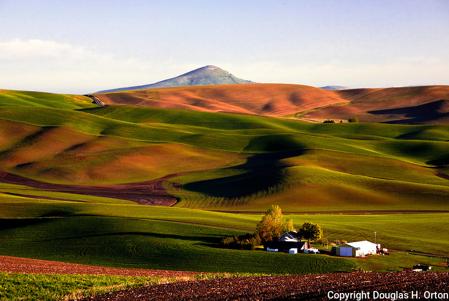 palouse ads com