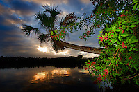 Sebastian River, Florida palm tree sunset
