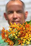 Foto: VidiPhoto<br /> <br /> LISSE - De Asclepia Beatrix als letterlijke kroon op je werk. Met de nodige trots presenteert kweker Nico Janson uit Lisse de prachtig gevormde bloem, waarvan er niet zoveel zijn in ons land. Slechts 5000 vierkante meter in totaal. Zowel de veredeling als de naamgeving is van de hand van Janson zelf. Het product heeft z&rsquo;n naam te danken aan de oranje, kroonvormige bloem. Twintig procent van de productie wordt door Janson zelf via rechtstreekse verkoop verkocht, de logistiek gaat in samenwerking met twee andere kwekers. Door de lastige teelt -elk jaar stomen tegen grondschimmels, arbeidsintensieve oogst , 18 graden nachttemperatuur en gevoelig voor trips- ligt de kostprijs van de Asclepias op bijna 40 cent, waardoor een steel minimaal 50 cent moet opbrengen. Doordat de Beatrix gewild is bij handelaren en een exclusief product blijft, is dat meestal geen probleem. De Lissense kweker, die nog een buitenteelt heeft met twaalf verschillende soorten zomerbloemen, probeert collega&rsquo;s ge&iuml;nteresseerd te krijgen in de Beatrix, zodat er meer onderzoek gedaan kan worden naar opkweek van uitgangsmateriaal en naar de teelt.