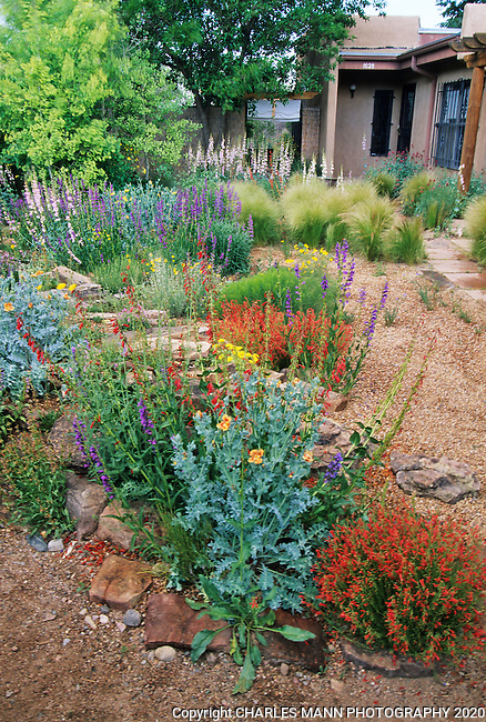 In the southwest andn Rocky Mountain areas, water wise landscape designs come in all colors and shapes and incorporate a wide range of both nativespecies as well as appropriate adapted plants, ranging from succulents and cacti to endemic penstemons and traditional perennials. Charles Mann's garden in Santa Fe features pensetemons, feather grass and other drought tolerant plants.