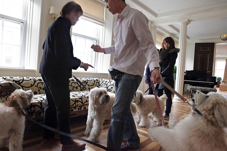 Pat McGregor, left, of Vancouver Dog Training and her employees Ming Tam, center, and Jessica Lin handle four wheaten terriers in an apartment on the Upper East Side of Manhattan on April 5, 2011. ..Danny Ghitis for The New York Times