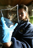 Forensic technician searching for evidence at a crime scene, Netherlands