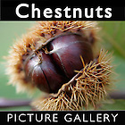 Chestnuts | Chestnut Food Pictures Photos Images & Fotos