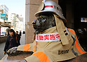 Lion statue gets dressed up as firefighter