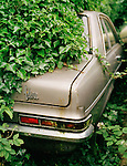 An old car - a Vauxhall Viva - covered in ivy.<br />