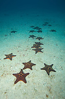 Congregation of Sea Stars