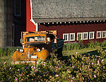 Old truck in front of a red barn in the Palouse Valley