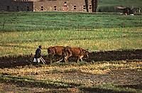 Afrique/Egypte/Env de Louxor/Ancienne Thèbes: Travaux des champs au bord du Nil