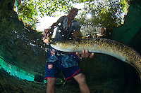 The Eels of Waai, Ambon, Indonesia