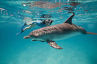 RW4311-D. Atlantic Spotted Dolphin (Stenella frontalis) and female snorkeler (model released). Resident pods of wild dolphins in the Bahamas off Bimini and Grand Bahama Island offer eco-tourists from around the world a superb encounter swimming with the playful marine mammals. Bahamas, Atlantic Ocean.<br /> Photo Copyright &copy; Brandon Cole. All rights reserved worldwide.  www.brandoncole.com