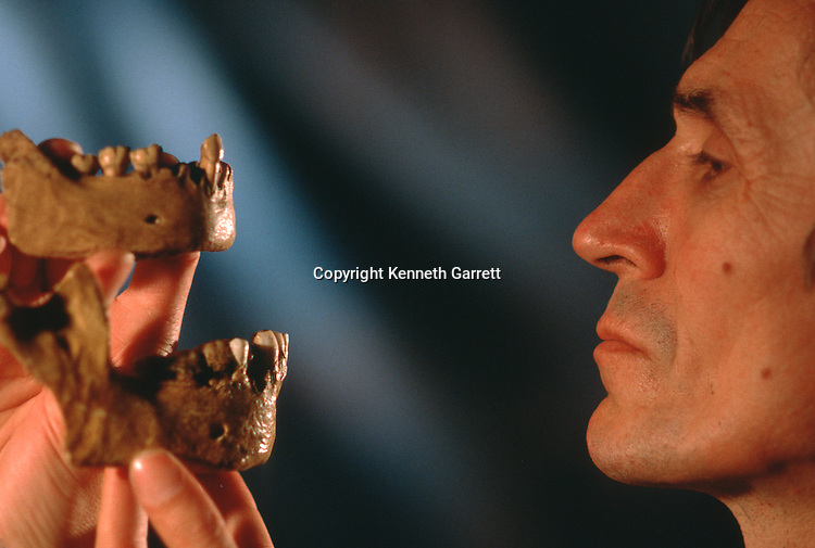Jakov Radovic compares 2 Neandertal chins, most ancient -receding, more recent-jutting, Croatian Natural History Museum