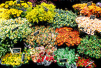Flowers, Market, Rue St. Andre des Arts, Left Bank, Paris, France