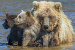 Katmai, Alaska, Part One: Of Bears & Fish