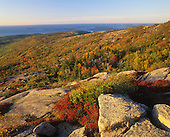 Autumn across Cadillac Mountain, Mt. Desert Island, Acadia National Park, Maine, USA.