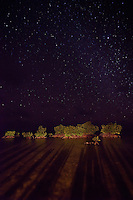 A stary night fills the sky above the lightly lit mangroves off the coast of southern Belize