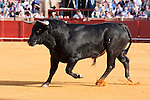 Bull fight scenes in Seville Spain