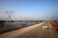 A dog stands on a deserted road near Sukker, in Sindh province, Pakistan.