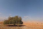 T-060 Jericho Balsam in the Jordan Valley