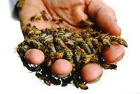 Bee Keeper<br />