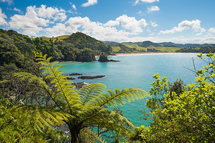 Woolley Bay from Whale Bay track, Tutukaka Coast, Northland, New Zealand - stock photo, canvas, fine art print