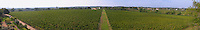 Vineyard. Panorama from the dovecote. Chateau Reignac, Bordeaux, France