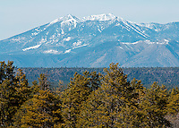 View of the San Francisco Peaks over treetops - Northern Arizona